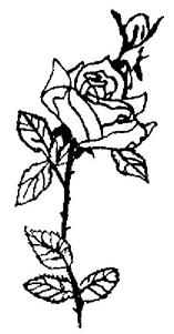 National Delicados Rose